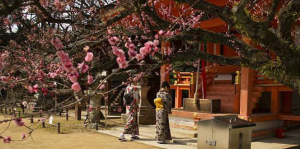 Shinto Temple in Kyoto, Japan. Photo credit: Wikimedia